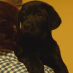 8 weeks old boy. Kennel Sodenia (PL) (2)