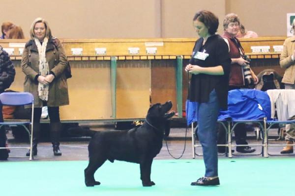 willy_crufts_2017