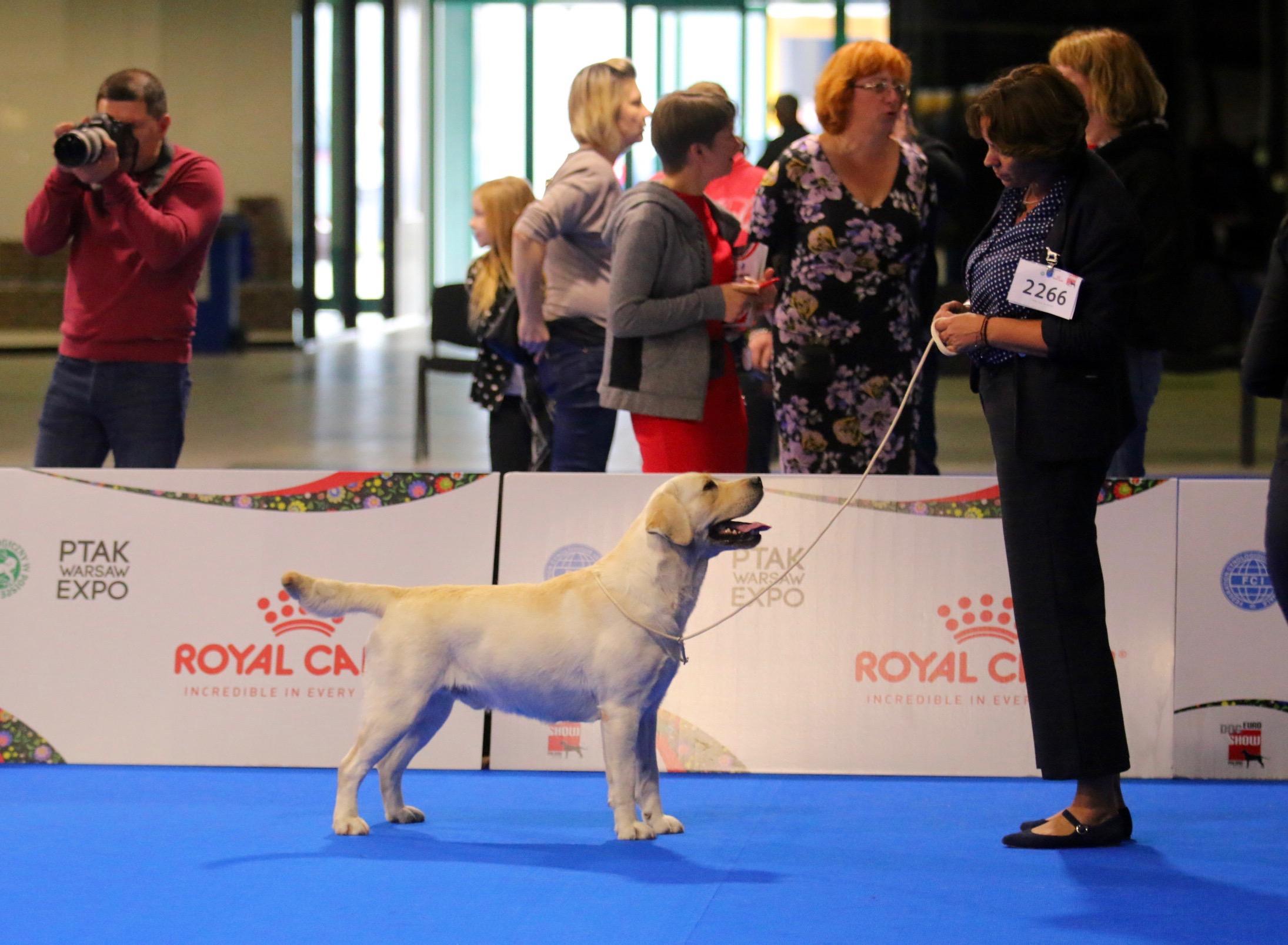 European Dog Show 2018, 11-14/10/2018