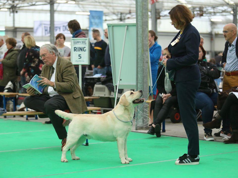 International Dog Show in Bleiswijk